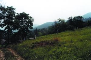 A dömösi református temető